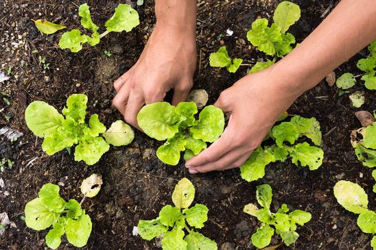 planting-vegetables.jpg